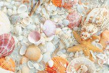 seashell / nature