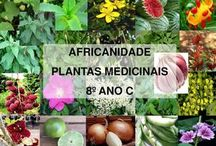 plantas africanas