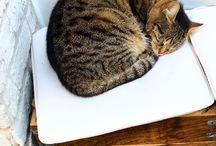 My Istanbul cat life❤️