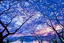 Beautiful Blue. ..