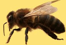Beekeeping / by Janet Hodnett