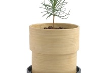 Xmas & Bamboo