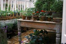 Gardening / by Jennifer King