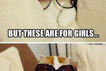 Dem memes, dem Kitty cat memes