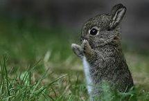 Cute Animals / Cute animals