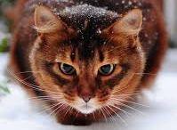 Наши коты / Наши коты производители