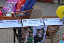 2014 ZWIERZAKI W MIEJSKIEJ DŻUNGLI / Zwierzaki w miejskiej dżungli  6 i 7 września 2014  Nika Zoo Millenium Hall