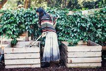 G A R D E N / Growing life -- fruit, veggies & flowers / by Robi Foli