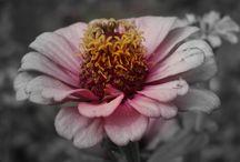 Kohli - Pflanzen (Blumen, Blüten, Bäume und mehr)