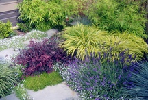 Garden Groundcovers / Get rid of the grass and spread the joy!