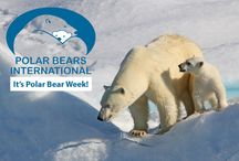 Polar Bear Week 2014 / November 2 - 8, 2014 is Polar Bear International's Polar Bear Week. Join Quark and the world's leading polar bear conservation group, Polar Bears International, in the Take the Next Step energy conservation challenge.