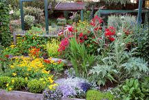 Boise Gardening / Tips and information on how to grow and maintain a beautiful, healthy garden in Ada County.