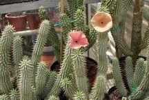 Conoscere le Piante Succulenti