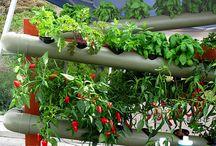 Gardening / by Christine Lining