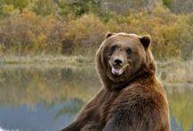 Ursos e outros animais
