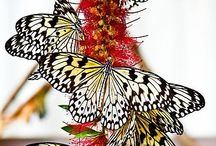 Butterflies / by Sheila Minnich