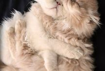 Милые создания :)