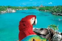 Tours and Attractions / At Cancun Great Vacations, you'll find the best Cancun travel options on travel deals and vacation packages. We offer reduced rates on incredible tours, exciting attractions, and cheap hotel rates.