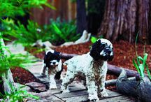Pet Friendly Landscaping Design / You can have it all - beautiful landscaping & a very happy pet! Take a look at these ideas for creating a pet-friendly yard that makes pet owners happy too!