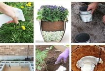 Gardening Tips and Tricks / All about gardening and popular time and money saving tips and tricks. We will also be adding HowTo infographics and short garden related videos.
