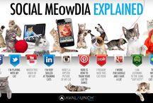 IKT och sociala medier