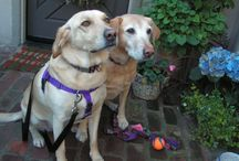2015 Doggie Guests @ Carmel Country Inn / Animals, Pets, Dogs, Cats, Pet Friendly Inn