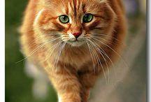 xXKittiesXx / Random pictures of kitties :)  / by xXLost SkyXx