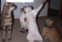Funny Animals / by Tammy Bridegroom