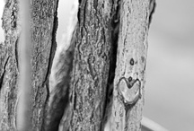 Love is in the air / by Jacques Macaire