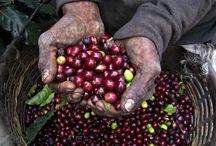 Specialty Coffee from Guatemala / #Specialty Coffee Guatemala # De La Gente