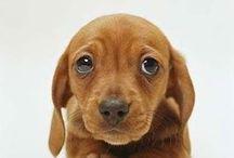 Bassottissimi / bassi mezzo cane lunghi un cane e mezzo adorabili