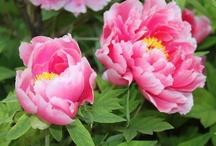 My Favorite Flowers / by Arlene Grant