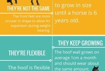 Horse hoof fact / Facts about horses hoof and how to keep them healthy
