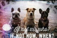 Ein Leben ohne Hund ist sinnlos / Selbstgemachte Spruchbilder/Bildbearbeitungen ... Quotes  #hund #hunde #dog #dogs #Bully #bulldog #Bulldogge #Frenchy #Frenchie