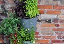Mcfadden Farm Organic Herbs