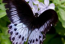 Butterflies / by Pamela Walton Carlock