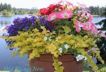 osázené květináče a truhlíky