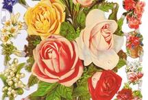 Blomsterglans