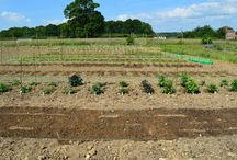 We made our beds....! / A selection of our farm flower beds