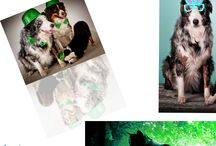 Pet Photography Image editing service