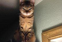 pisica întunecată