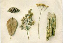 'plants