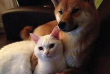 Shiba Inu Love / by Jennifer Hill Photography