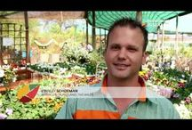 Plantland Tips and Tricks