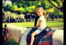 Experience 1 Riding for the disabled / In Dubai  bevind  zich  de  non-pro fit  organisatie 'riding for  the disabled'. Deze  hulporganisatie zet zich in voor minder valide kind eren, door met paarden therapeutische doelen te  bereiken. De therapie bestaat uit een mentale, fysi eke evenals een emotionele sessie.