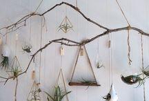 Tree hanging