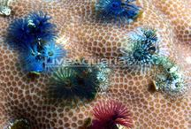 Saltwater Aquarium Ideas and Inspirations / Well, we just got a saltwater tank here at Lakeview Animal Hospital! So of course we needed a Pinterest board to save all of our ideas :)