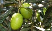 Rośliny ogrodowe / Rośliny do ogrodu - porady, uprawa, nawożenie, rozmnażanie i więcj na blogu hortologia.eu