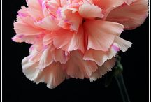 Birth flower