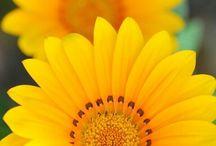 -Yellow..
